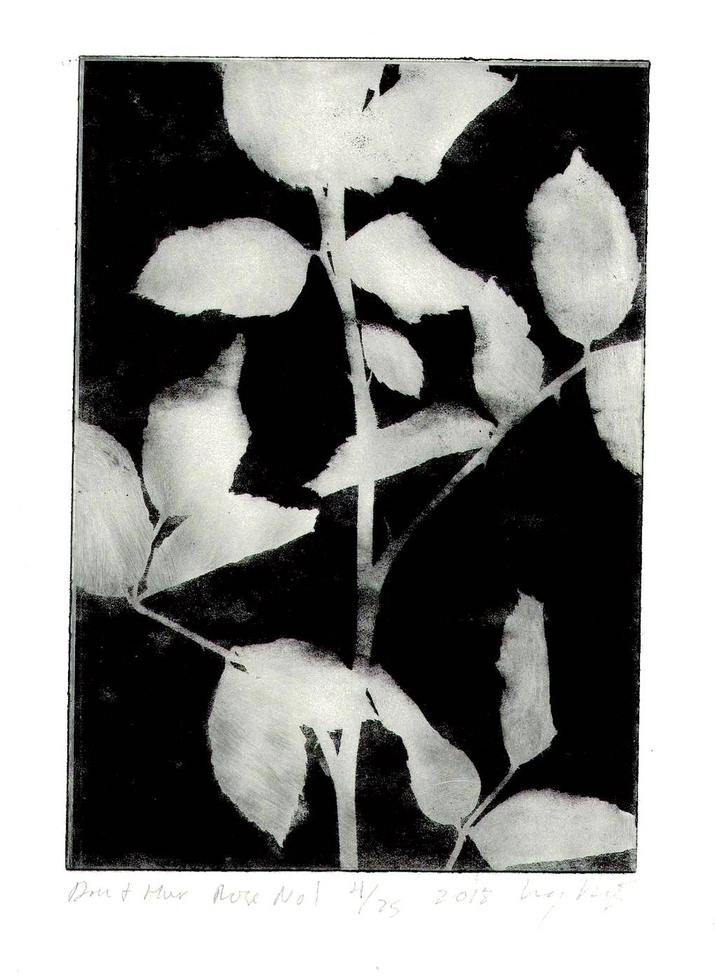 Lucy Augé has produced a collection of ethereally lovely etchings from Dan Pearson's garden