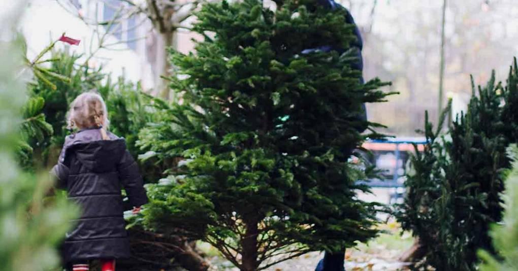 Christmas Trees - How To Choose A Christmas Tree