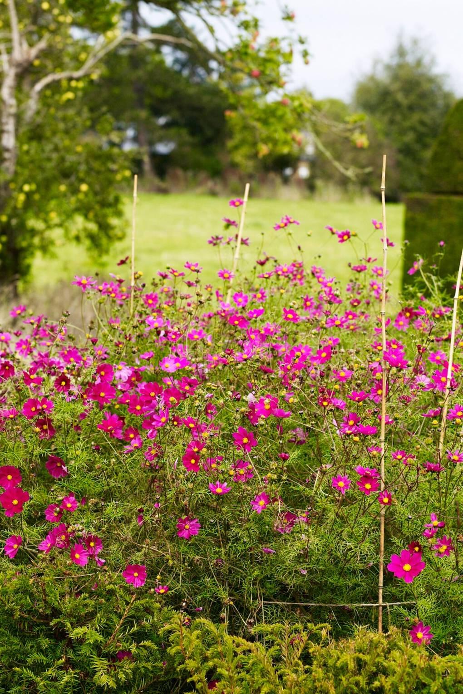 An English Flower Garden | Garden Design Ideas and Inspiration ...