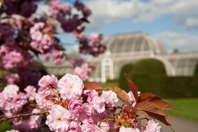 Springtime walks, Kew Gardens