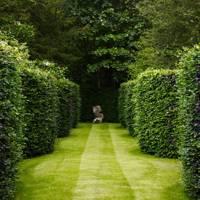 Serpentine Hedges