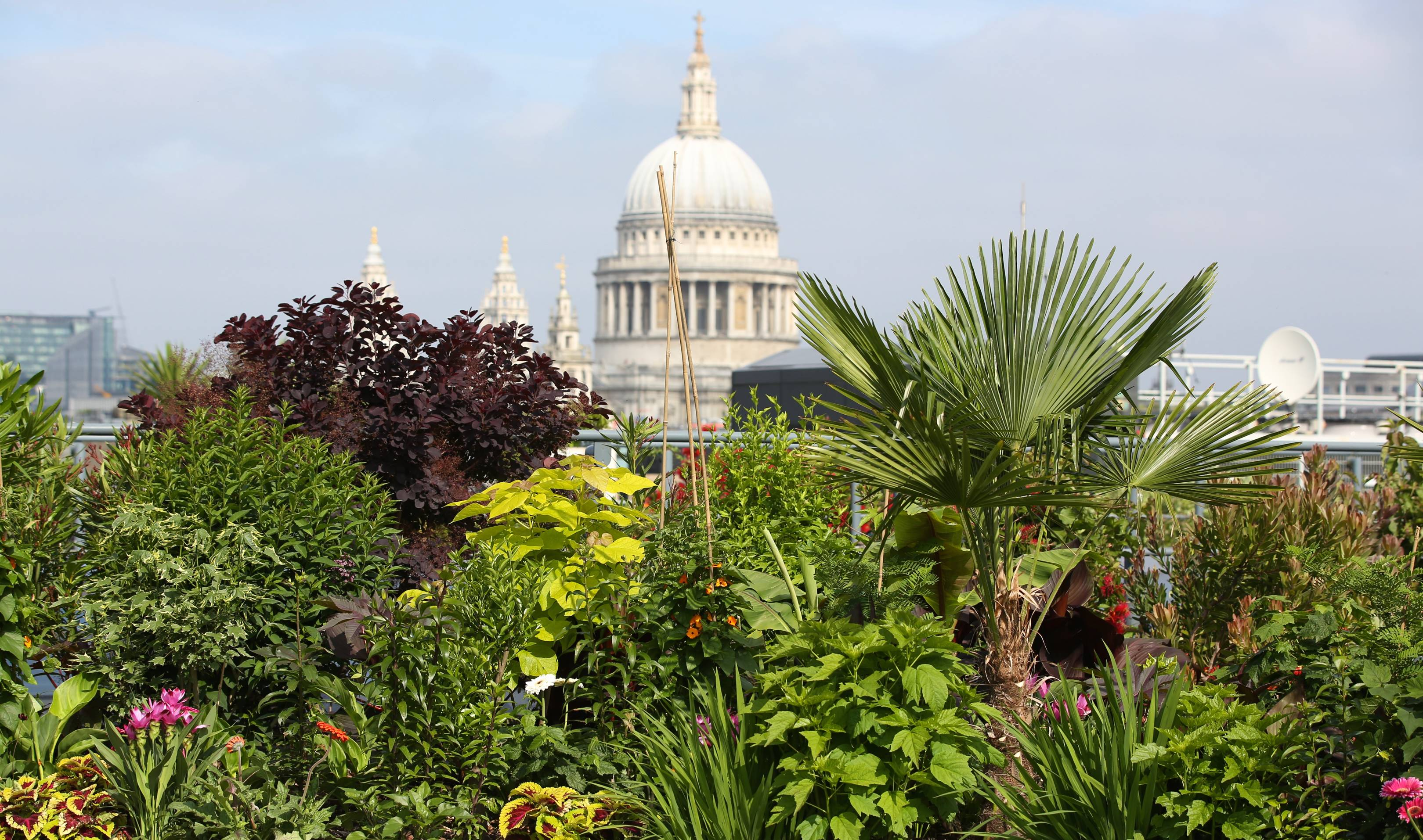 London's private gardens are throwing their doors wide open this weekend
