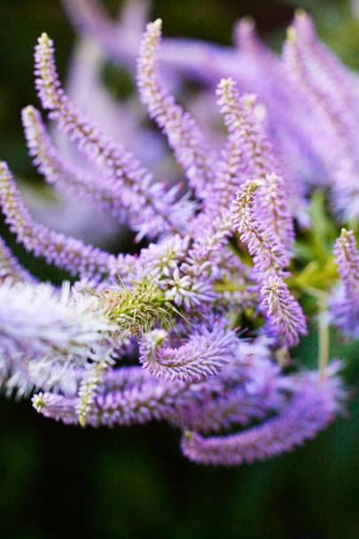 Lavendelturm