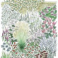 Garden border Planting Ideas plans   Garden design ideas