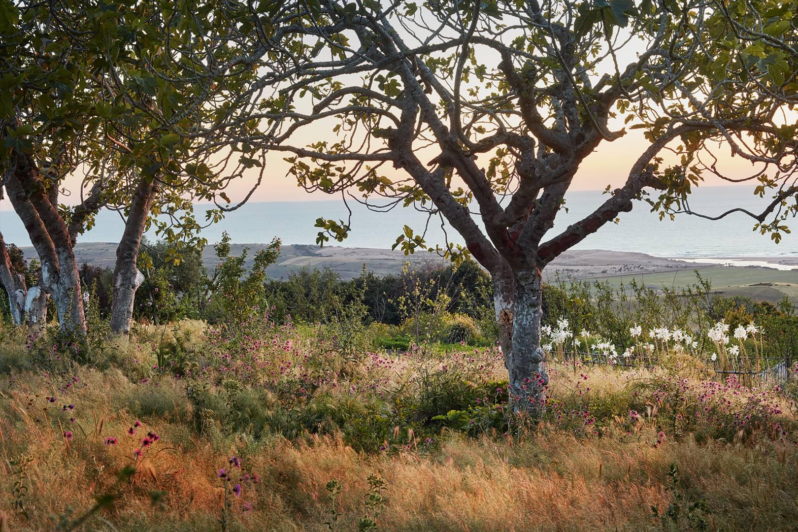 A Moroccan hillside garden outside Tangier preserving indigenous ...