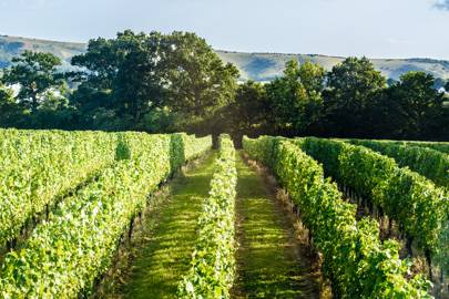 An English winery has entered the inaugural list of the World's Best Vineyards