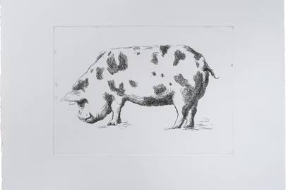 Animal Etchings