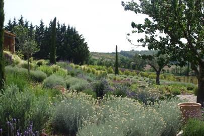 Majestic Meadows