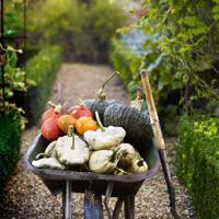 Squashes and pumpkins