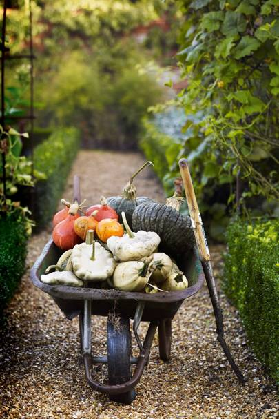 Squashes and pumpkins