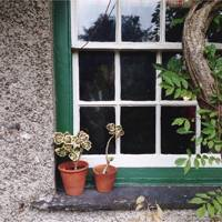 Windowsill with geraniums