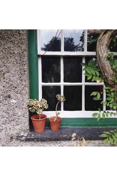 Windowsill with geraniums
