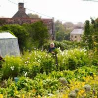 Flower Rows - An English Flower Garden