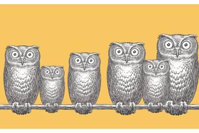 Owl wallpaper