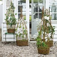 Sweetpea Frame Decorations