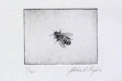 'Honey Bee' by John Douglas Piper