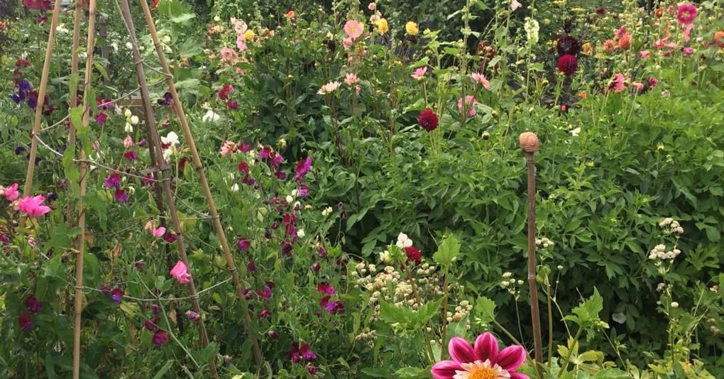 Gardenism & Landscape 🦋 - cover