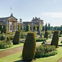 Topiary Yews at Bowood