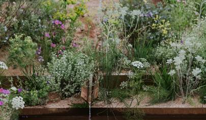 All The Medal Winners From Chelsea Flower Show 2018