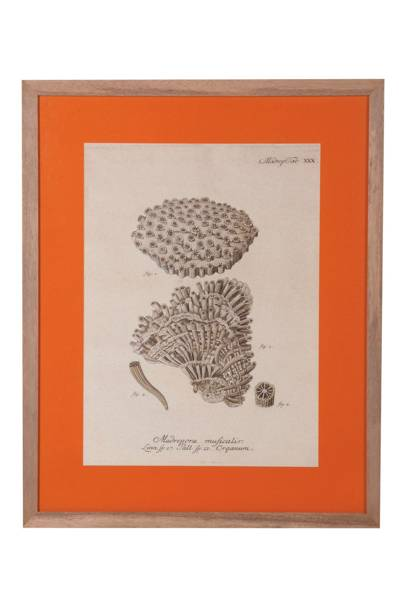 Muficalis Print