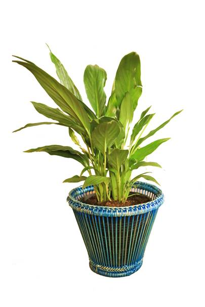 April 1: Kalinko Kalaw Planter in Blue, £12