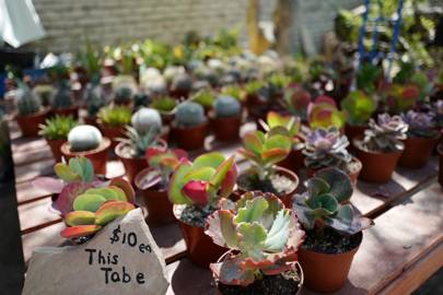 Succulents for Sale at