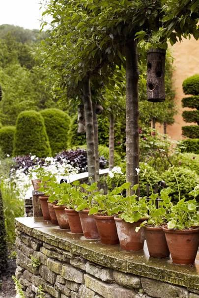 Yew Shapes   Arne Maynard's Garden
