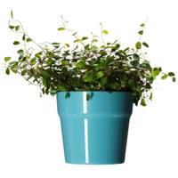 Majskorn Plant Pot