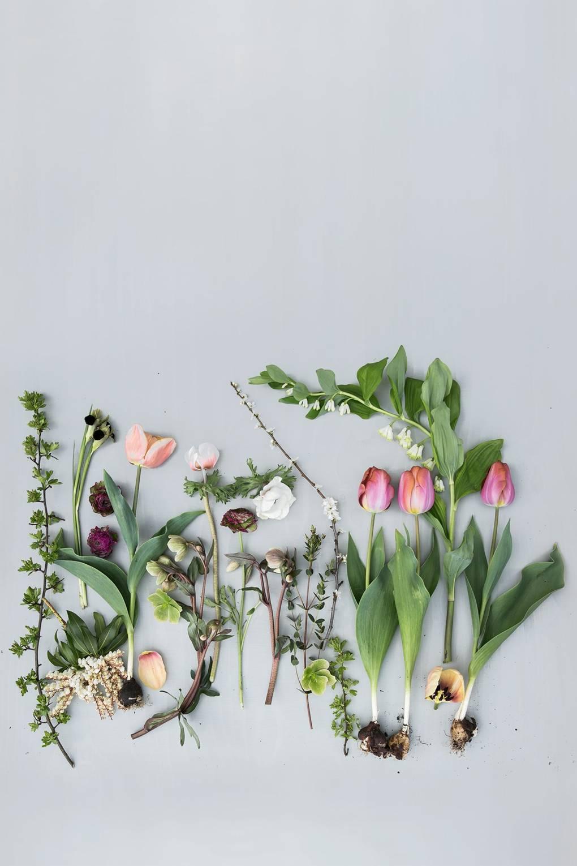 How To Grow Spring Bulbs How To Grow Flowers House Garden