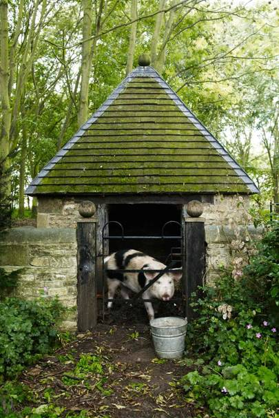 Pig Shed - Bunny Guinness' Cambridgeshire Garden