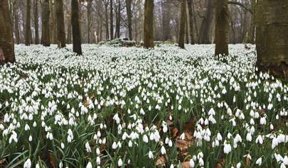The Best Places To See Snowdrops In The Uk House Garden