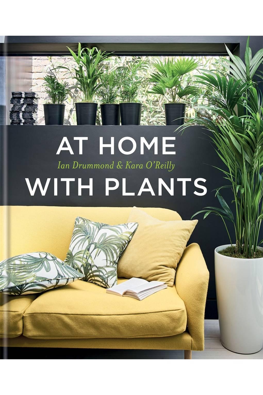 The Best House Plants   Interiors   House & Garden