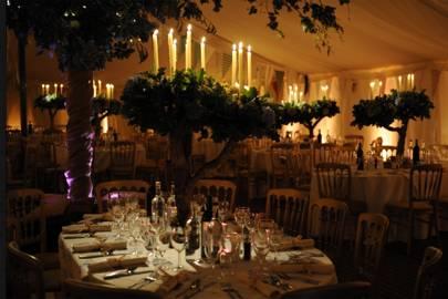 Candlelit Trees