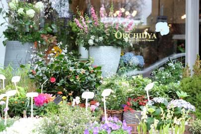 Orchidya