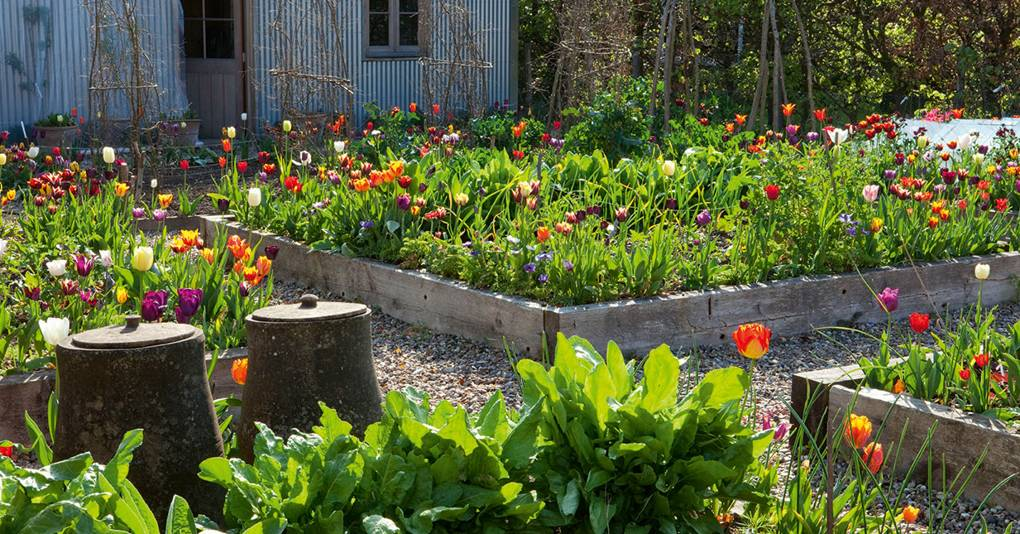 Tom Stuart-Smith's own garden serves as a laboratory for his planting experiments