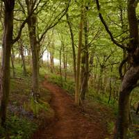 Woodland Path - Traditional Cornwall House