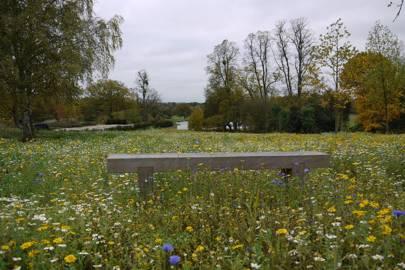 Meadowing