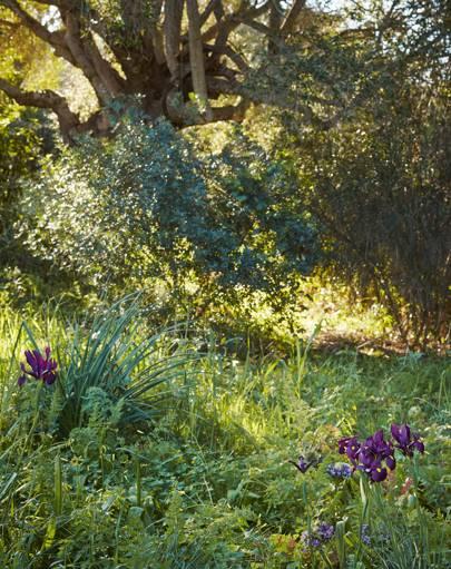 Moroccan irises
