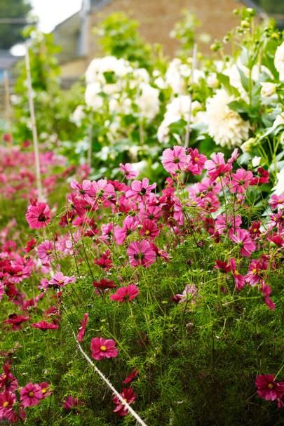 Border - An English Flower Garden