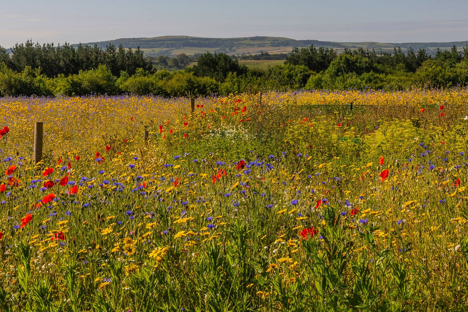 Jo Malone London is helping to save the UK's meadows and wildflowers