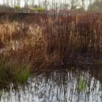 Pond - Piet Oudolf's Dutch Garden