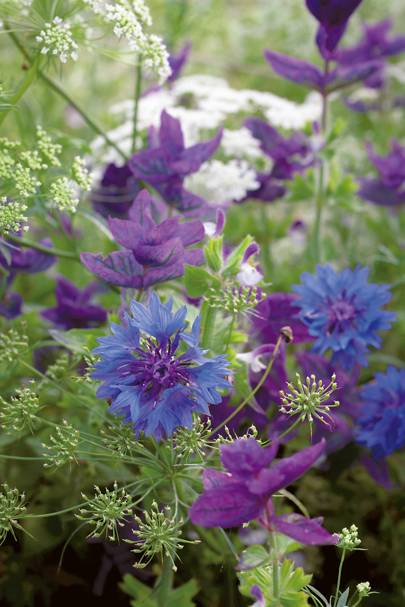 How To Grow Flowers From Seed House Garden