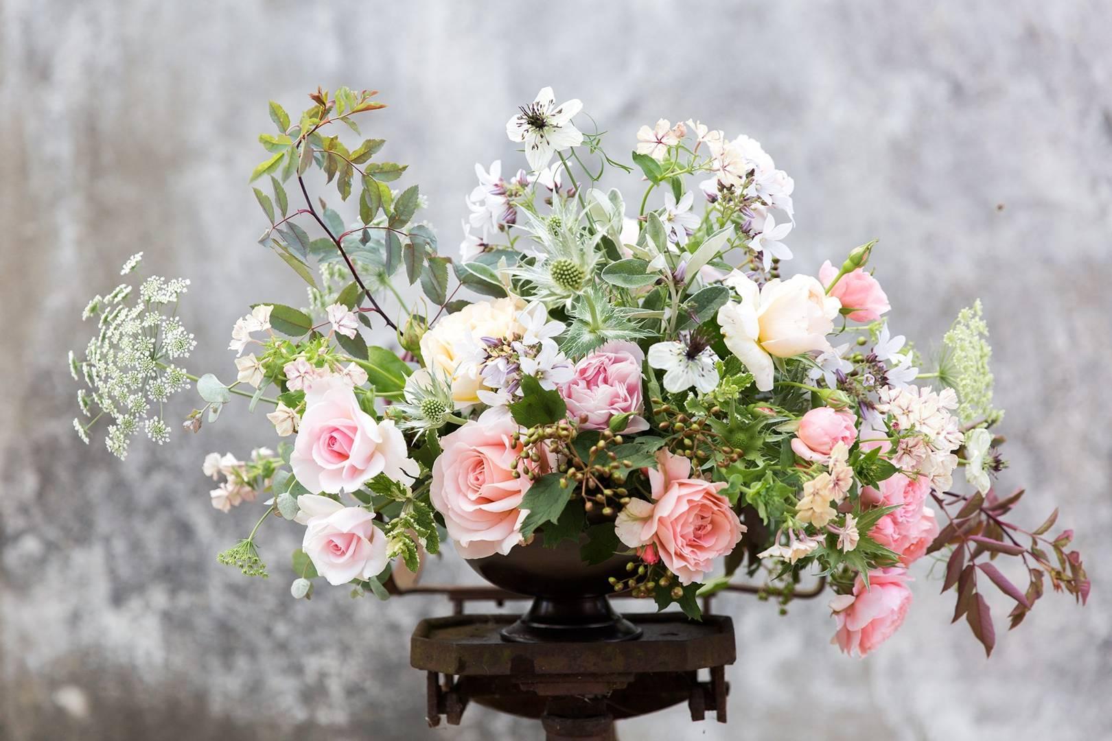 New year flowers- Shrub Roses