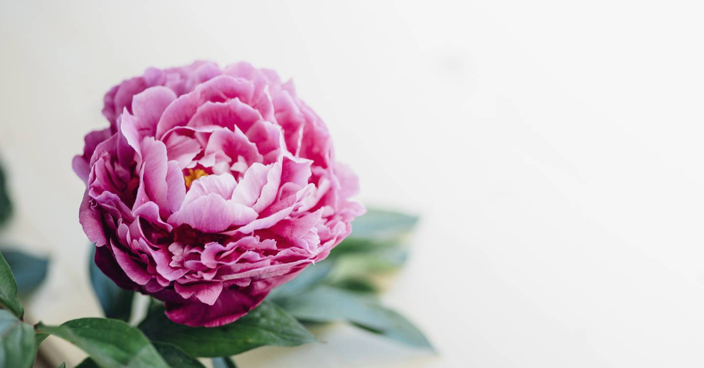 Peonies Season Everything You Need To Know House Garden