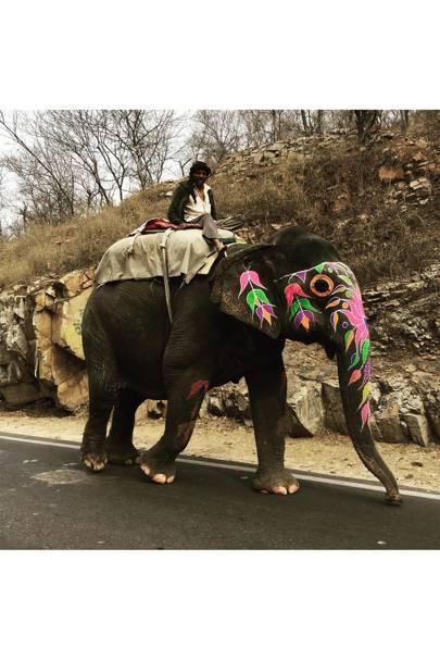 Elephant Babur