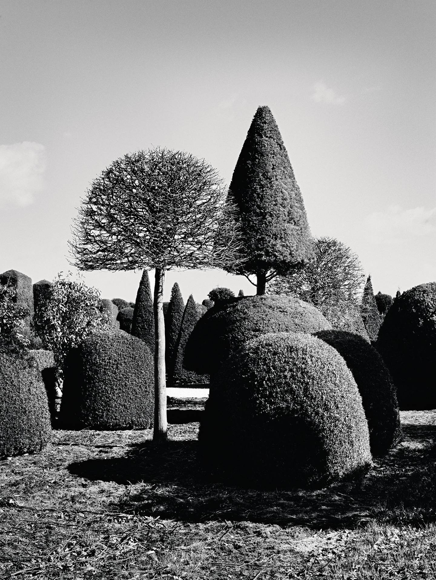 The Best Trees To Create Topiary And Ornamental Shapes House Garden