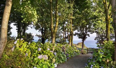 A National Collection Of Hydrangeas Enlivens The Gardens Of Lagg House In  Scotland