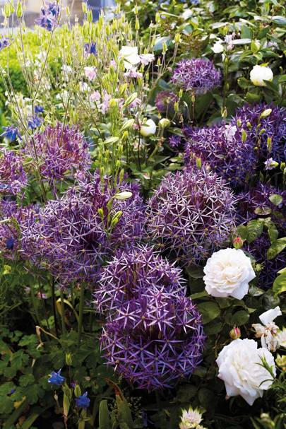 Bulbs, corms and rhizomes