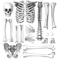 Skeleton Wall Sticker