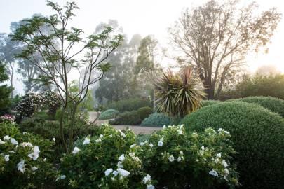 Yarra Valley Garden, page 129